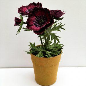 Anemone 'Bordeaux'