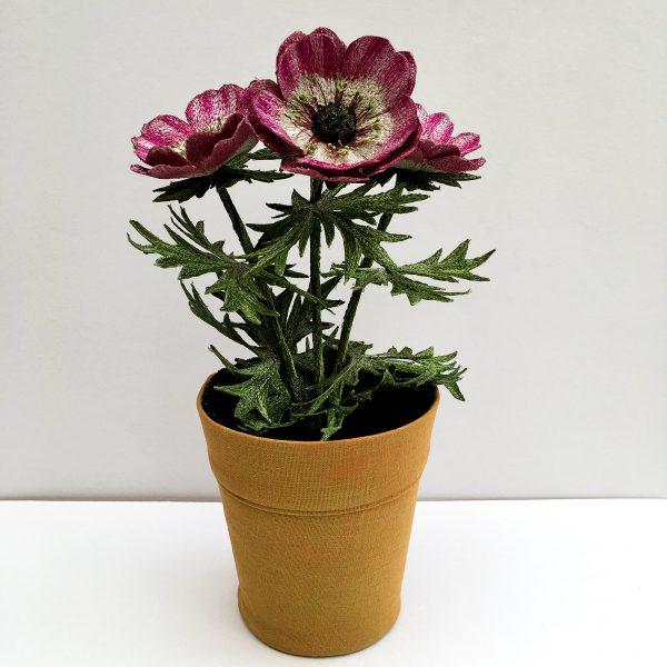 Anemone 'Coronaria'