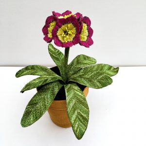 Auricula 'Cherry Picker' Small