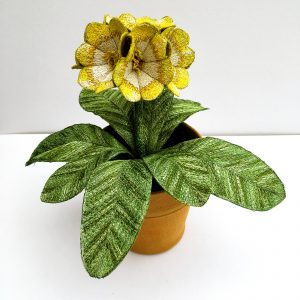 Auricula 'Pot of Gold'