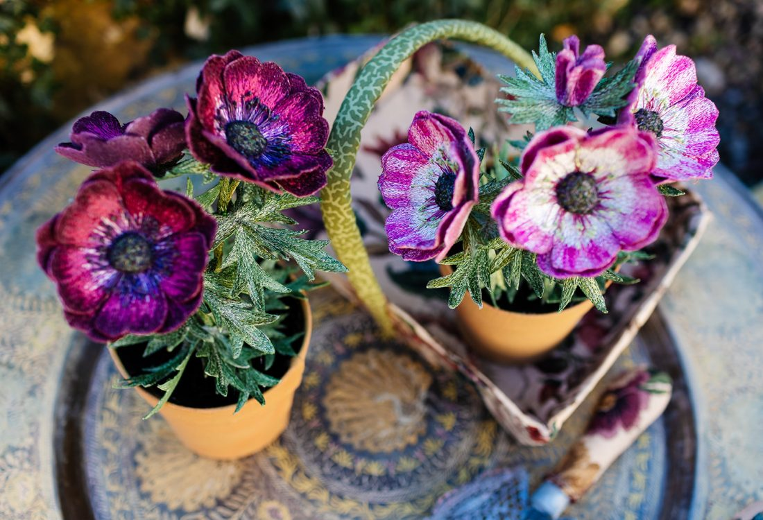 Anemone Pot Plants (Spring 2021) by Corinne Young. Photography by the Happy Brand Photographer.