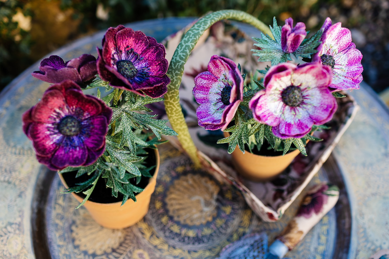 Anemone Pot Plants
