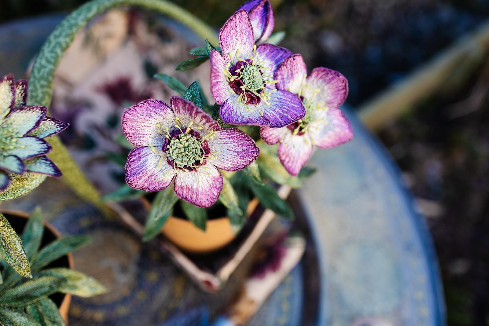Hellebore Pot Plants