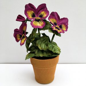 Pansy Pink Tricolour
