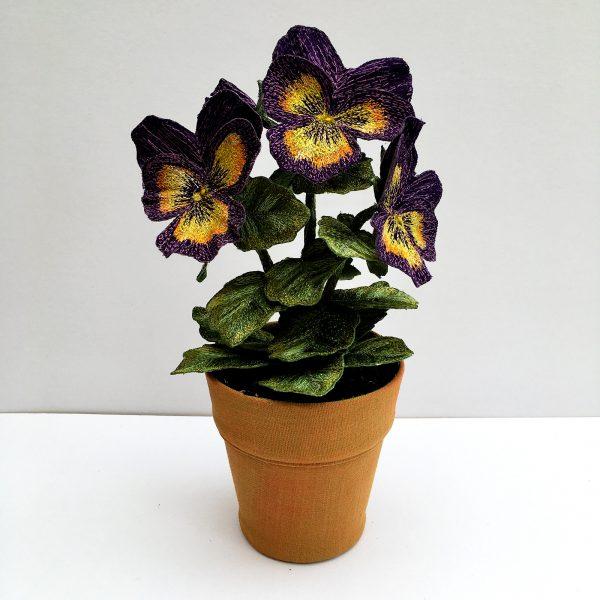 Pansy Purple Tricolour